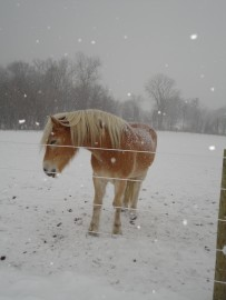 Brrrrr ... it's getting cold! 5 Tips for Winter Horse Care