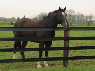 Flexible Fencing is a Safer Alternative for Horses