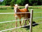 Keep your horses contained with electric tape