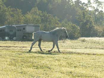 Casey-I-Other-Images-Horse-In-Pasture.jpg