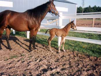 Lisa-Z-Other-Images--Mom-and-Foal-with-Flex.jpg
