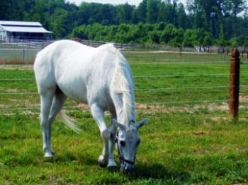 Rotational Grazing Keeps Pastures and Horses Healthier